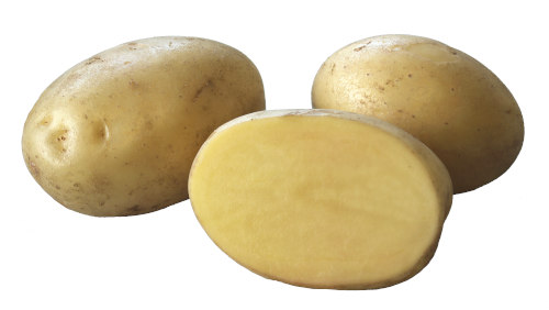 Acoustic potatis sort