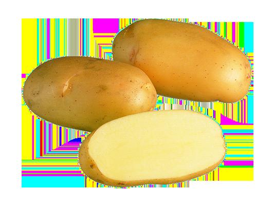Fambo suomen perunat
