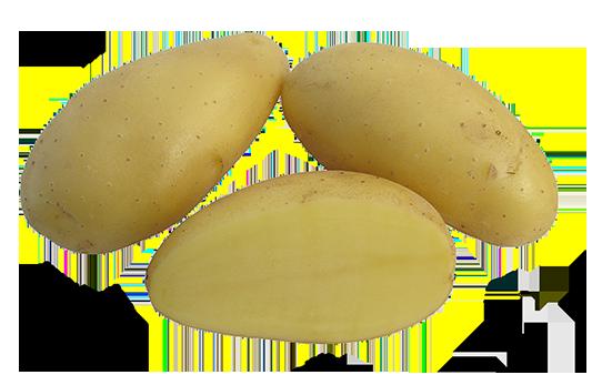 Jazzy vanhat perunalajikkeet
