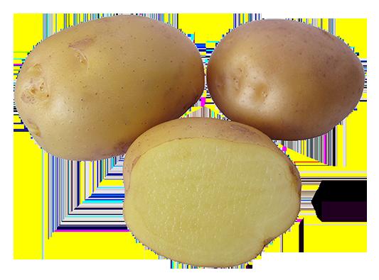 Jussi potatis