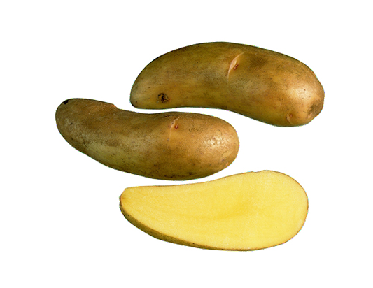 Puikula perunalajikkeet suomessa