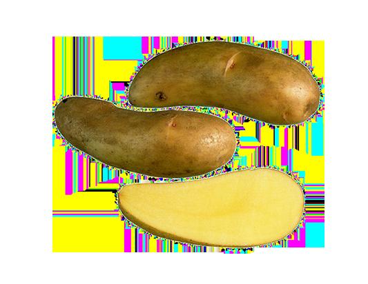 Puikula potatis sort