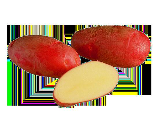 Rosamunda peruna