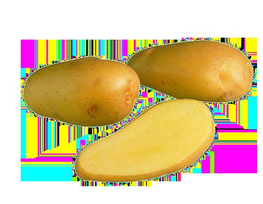 Siikli vanhat perunalajikkeet